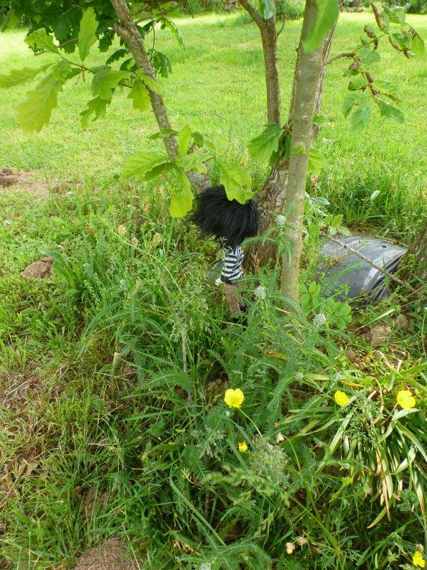 Dans l'herbe après la custo! (2)