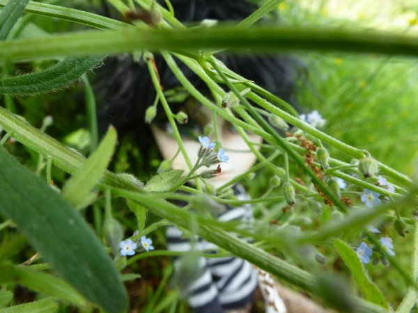 Dans l'herbe après la custo! (3)