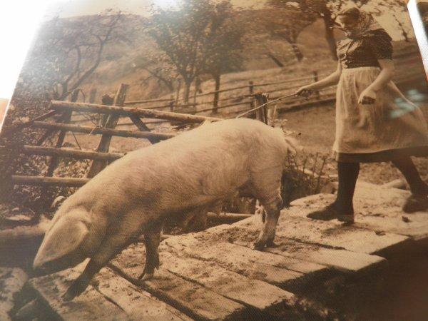 métiers d'autrefois : porcher