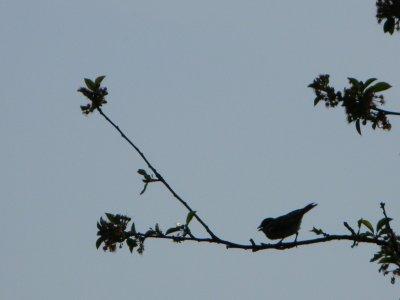 Entre Ciel et Terre, il y a Oiseaux, et autres êtres qui volent...