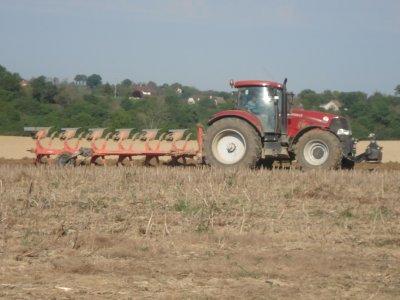 Labour 2011 dans la plaine des pyrénnés.
