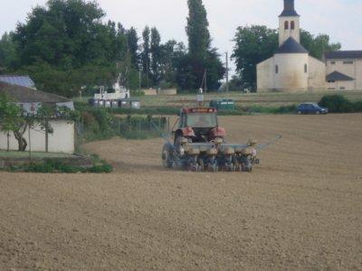 Semis de Maïs semences 2011