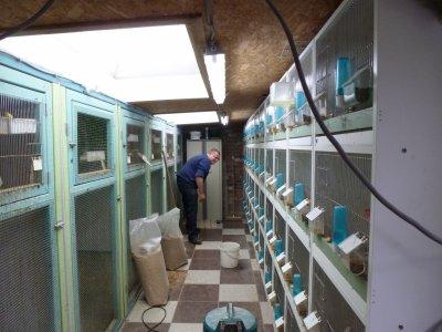 Préparation des oiseaux et nettoyage pour Maline