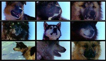 voici quel que photos des chiens