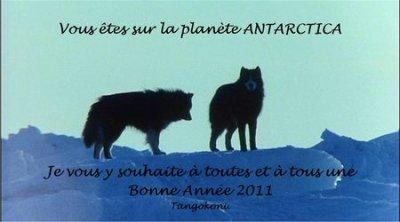 les chiens de antarctica
