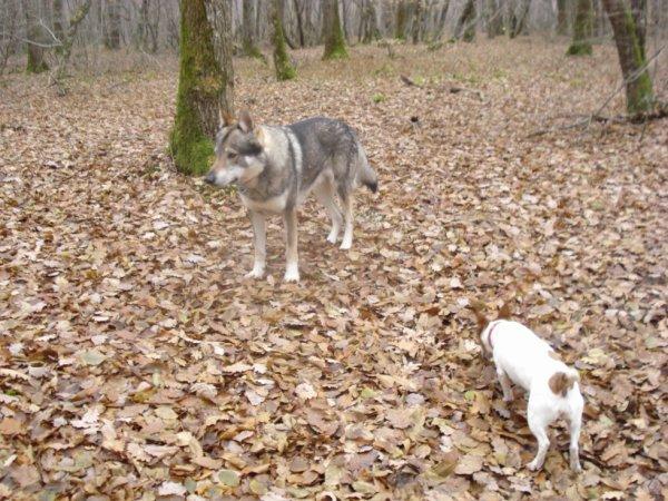 Wolf et Luna ballade en foret!!!!