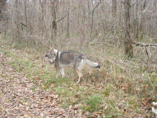 Wolf en ballade!!!