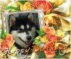 Joyeux Anniversaire my little wolf <3 <3 <3
