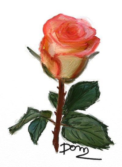 La  rose de l'Amour !!!