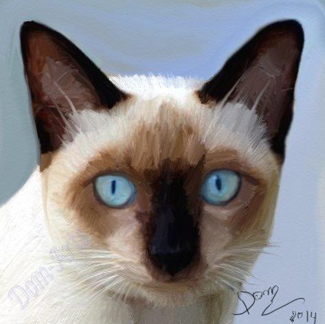 Le chat au yeux bleu