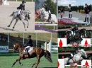 Photo de poney-fantastique