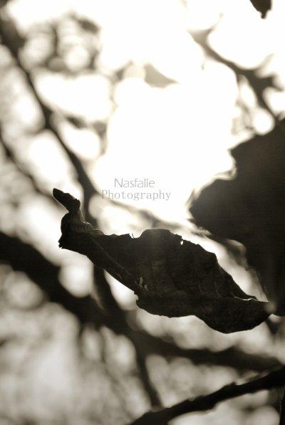 """""""Mais cette année, il n'y aurai pas que les feuilles qui tomberons.. tu es tombé en meme temps qu'elles, et nous sentons pour la première frois, cette froideur d'un automne qui ne se terminera sans doute jamais... """""""