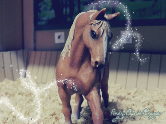~ Bienvenue au Poney-Club de l'Oranger ♥