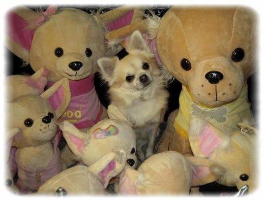 Comment les chiens choisissent leurs jouets ?
