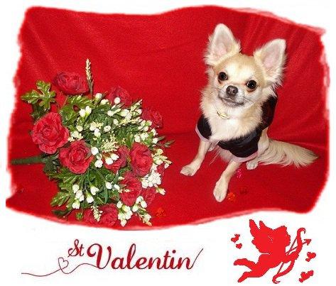 Pour la St Valentin, dînez avec… votre chien !