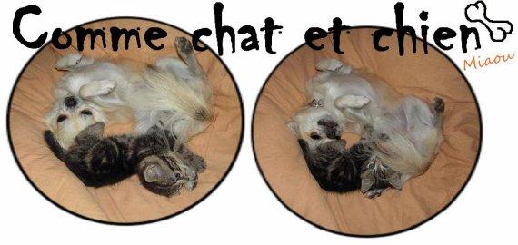 Toutes les astuces pour une bonne entente entre vos chiens et chats!