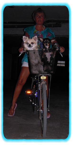 La randonné à vélo avec son chien