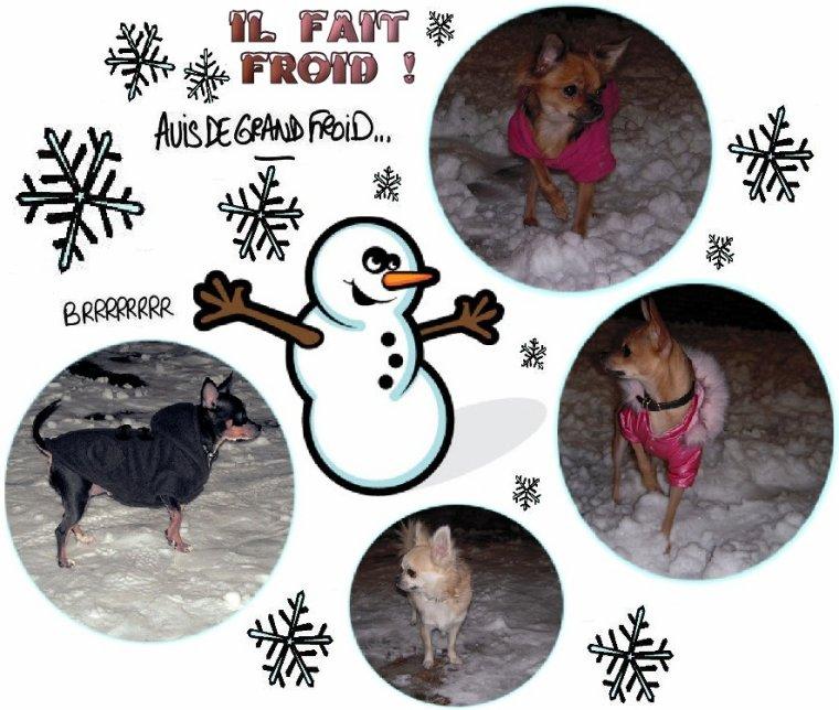 Protéger un chien du froid