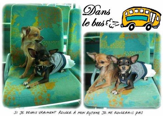 Se déplacer en transports en communs avec son chien