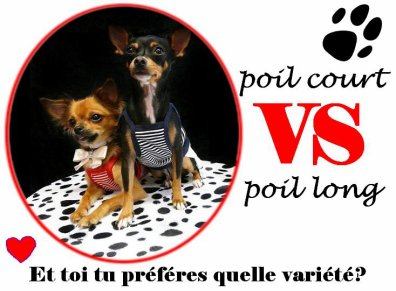 Poil court  VS Poil long