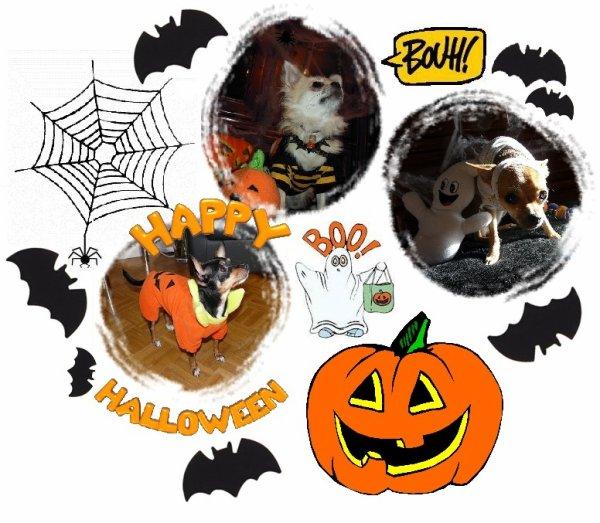 Votre chien aussi peut fêter Halloween