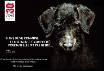 PROTEGEONS LES ANIMAUX !!!!