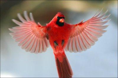 Oiseau en Vol .