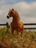 Du soleil, un poney, une amie... Que demander de plus ?