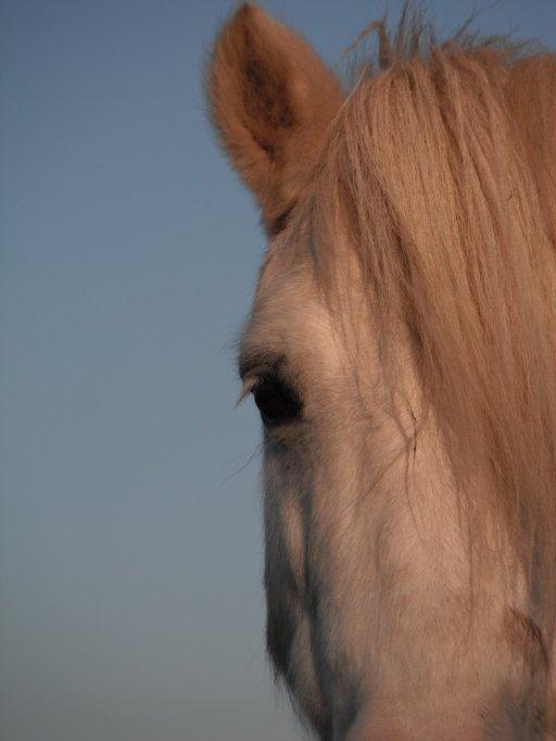 """"""" Le cheval t'apporte ce que l'être humain est incapable de te donner """""""