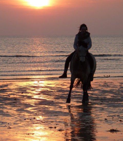 Quand un cheval est en liberté, il ne reste que la vérité...