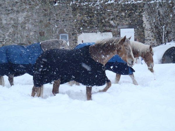tempette de neige en Normandie!