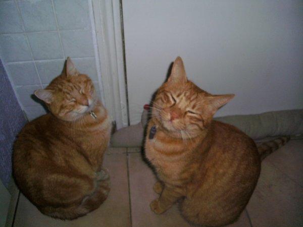 Mon Tivi et mon Tigrou