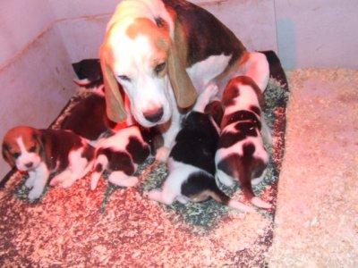 mon chien et sa petite famille