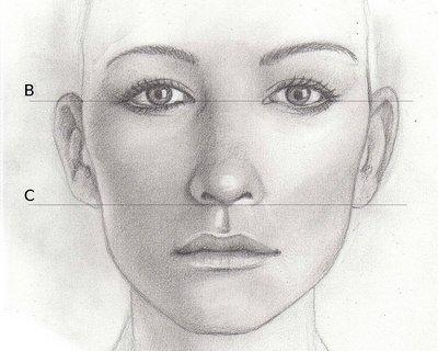 Connu Les proportions du visage de face - Zouhir Nasri LA49