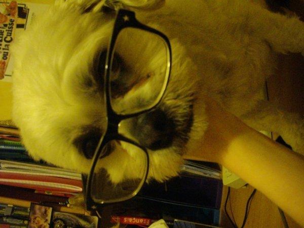 Mon chien à lunette !!