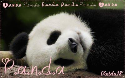 I love : Pandas.