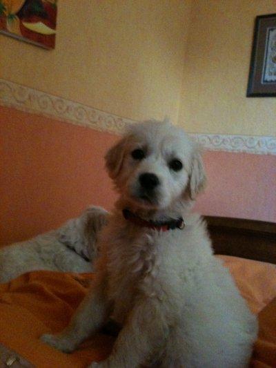 my baby dog i love ya !!! XD