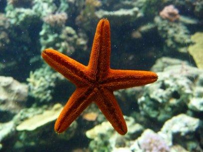 on se dit, la merveille est sous l'eau