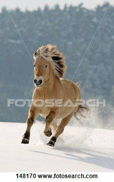 Mon poney ... <3