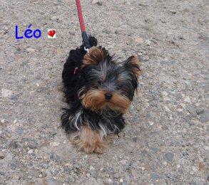 Léo ♥