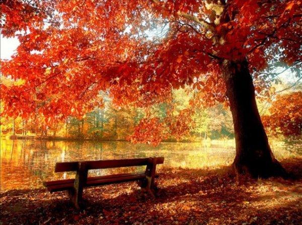Les arbres sur notre terre, c'est aussi toute une vie au fil des saisons