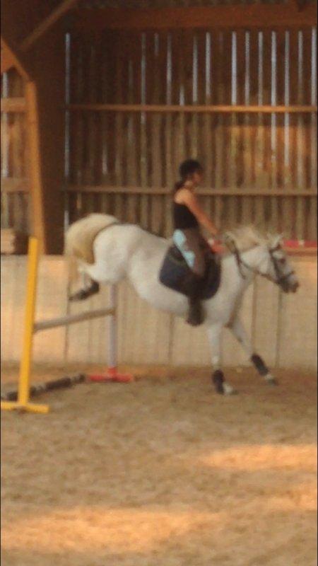 Étape d'un saut en équitation