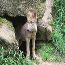 Photo de loups-louves-43