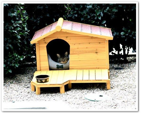 Dimanche, 24 Octobre +++ Nouvelle photo Twitter de Tabitha Jones Madden-Richie !  +++ Nicole nous a poster sur twitter une nouvelle photo de son chat adoré qu'elle a adopter il ya quelque mois. Les Maddens on installer une niche pour Tabitha Jones Madden-Richie, So cute !