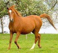 1er petit question pour savoir si vous conaisez un peux le chevaux