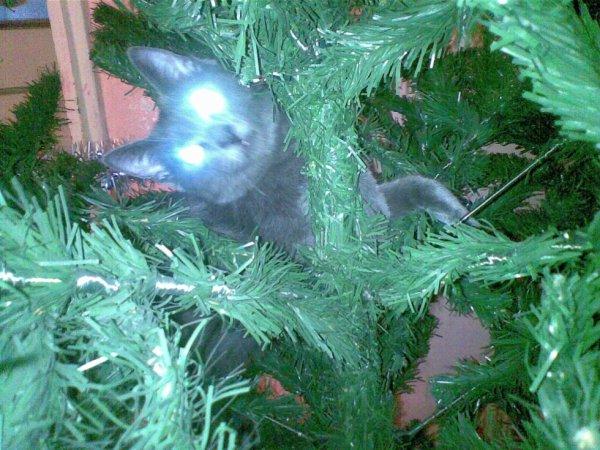chat de la famille à l'arbre de Noël