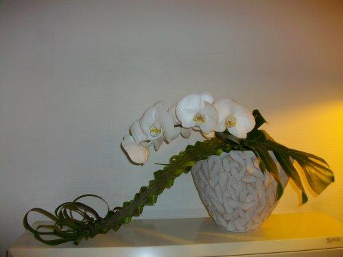 Tapis de Typha et Phalaenopsis