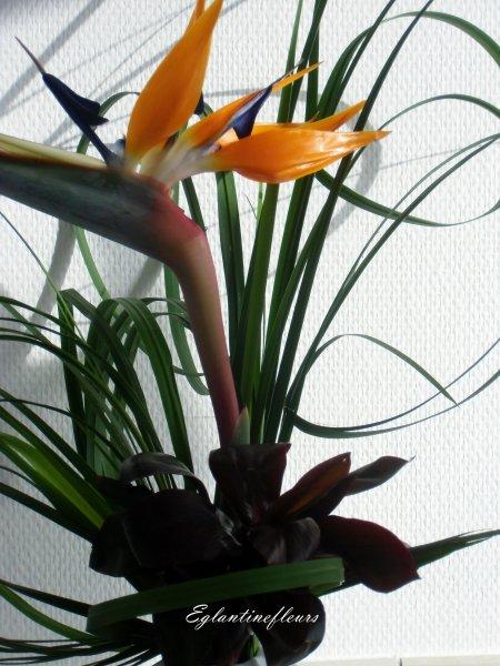 Typha 1ère cueillette pour le bouquet du week-end...