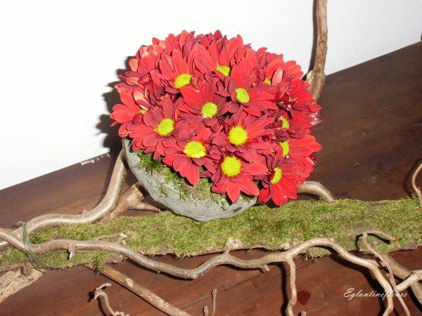 L'automne, saison des chrysanthèmes...