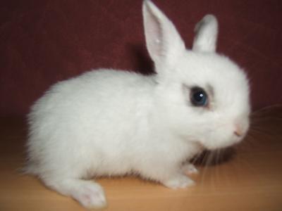 Blog de lapins nain57 j 39 adore les lapins - Photo de lapin mignon ...